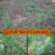 Fall Weed Control
