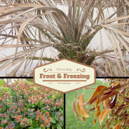 Preventing Frost and Freezing