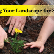 Planting and Pruning Your Landscape for Spring