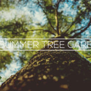 Taking Care of Trees in the Summer