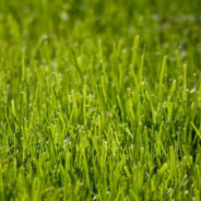 Preparing Your Lawn for Warmer Weather