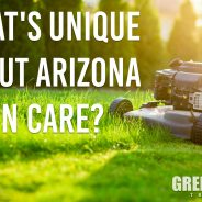 Basics of Lawn Care in Arizona